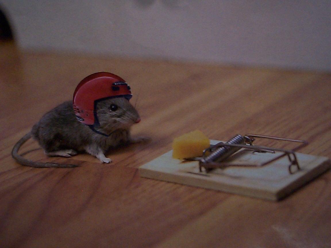 Ferryantes anonimos la trampa para ratones - Trampas para ratones y ratas ...